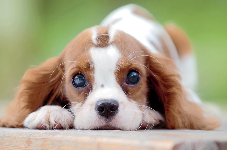 cachorro_caracter