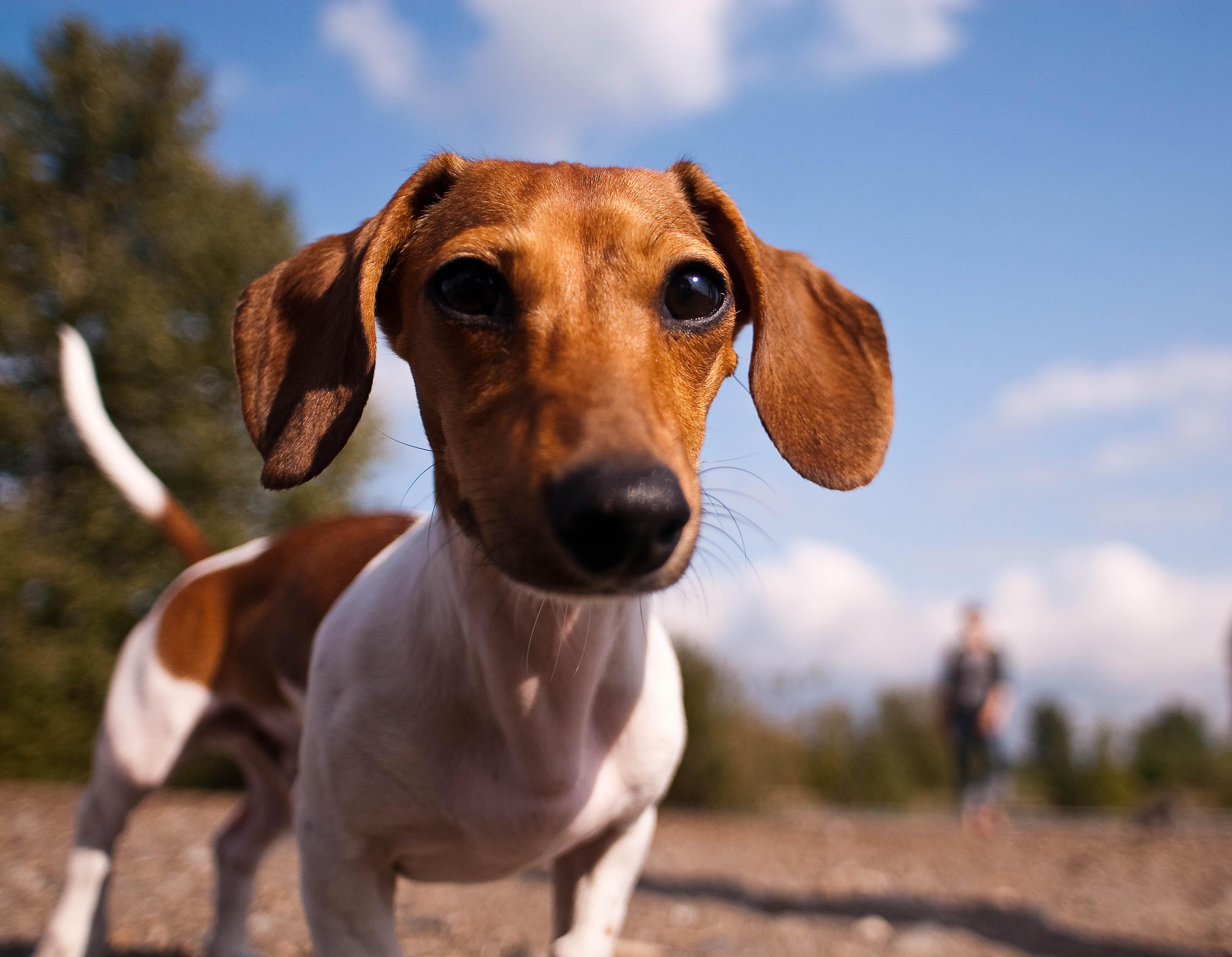 cachorro_paseo_1